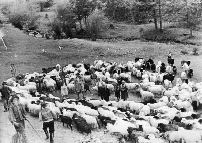 Strânsul oilor, anul 1965